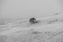 Lone Tree On The Snowy Slopes ...