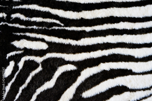Canvas Prints Zebra Zebra texture carpet