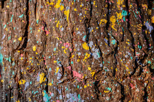 Tree Bark In Multicolored Colors Environmentally Friendly