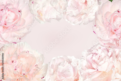 Foto auf AluDibond Blumen Elegant spring floral frame in pastel colors with creamy peonies. Vintage delicate springtime background for seasonal holidays and events with space for text