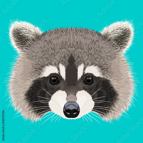 Cute isolated raccoon face with detailed fur Wallpaper Mural