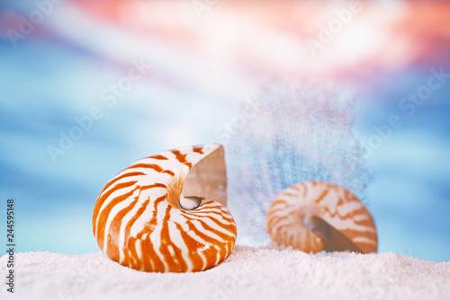 Valokuva  nautilus seashell sea shell