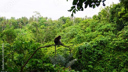 Photo  Monkey on the tree Bali