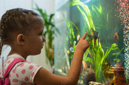 girl child looks at the fish in the aquarium Canvas Print