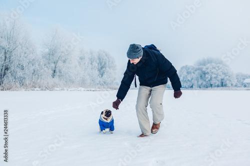 Obraz na plátne Pug dog walking on snow with his master
