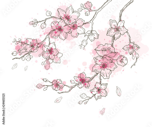 Spring sakura flowers blossom art set, hand drawn watercolor style. Cute paint cherry plant vector illustration, isolated on white background. Realistic floral bloom for japanese, chinese holiday card Wall mural