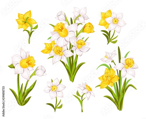 Fotografie, Obraz Set of beautiful narcissus flowers for cards, posters, textile etc