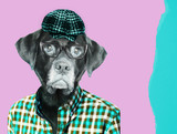 Stary aporter pies labrador noszenie okularów, noszenie czapki vintage pageboy. Kolaż sztuki współczesnej. - 244631314