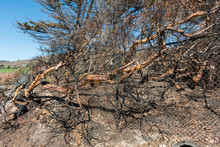 Aftermath Of The Woolsey Fire At The Nicholas Canyon Beach In Malibu, California