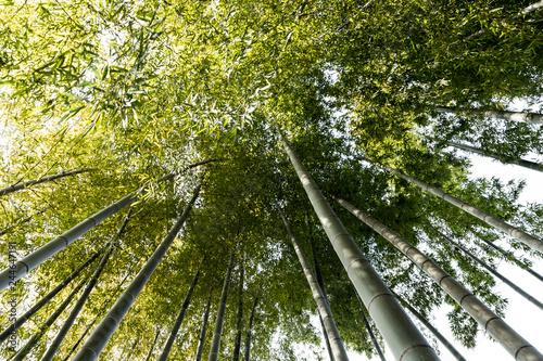 Poster Bamboe (自然風景)竹林風景1