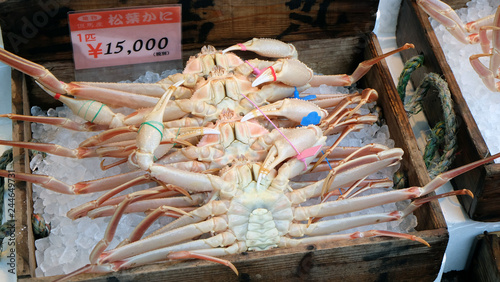 Fresh and live Matsuba Kani crabs for sale displayed in a