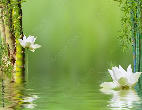 composition aquatique avec bambous et fleurs blanches de lotus