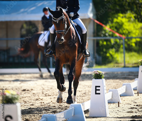 Dressage horse in the tournament in the Galopp gait in the ascending phase..
