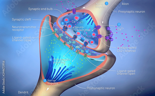Fotografie, Tablou  3d illustration of the scientific function of a synapse or neuronal connection w