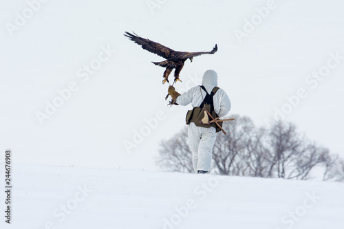 Hunter with golden eagles on hand. - Image