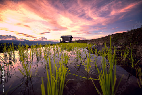 Poster Rijstvelden Beautiful landscape view of Rice fields, Pa bong Pieng,Mae Jam, ChiangMai,Thailand