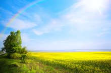 Spring Landscape Background; Yellow Flower And Blue Sky