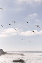 Sea Gulls Flying Along The Coast Of San Diego At Children's Pool On A Sunny Day Above A Wild Ocean.