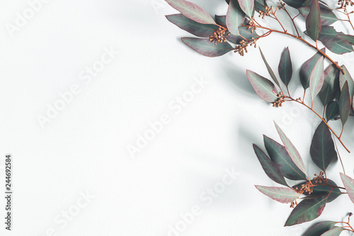 Plakaty szare  eucalyptus-leaves-on-pastel-gray-background-pattern-made-of-eualyptus-branches-flat-lay