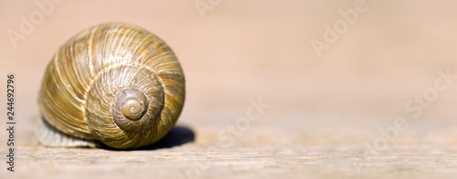 Slow web concept - banner of a resting snail, shell with blank, copy space