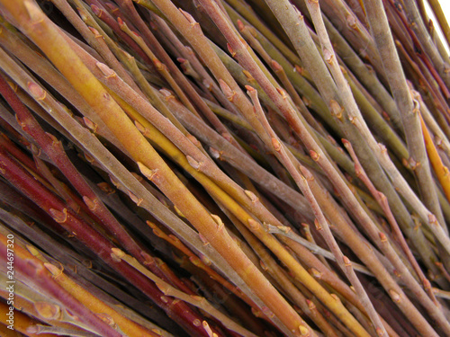 A lot of willow twigs - raw material for basket weaving Fototapet