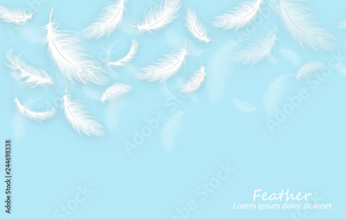 Fototapeta  Feathers background Vector realistic