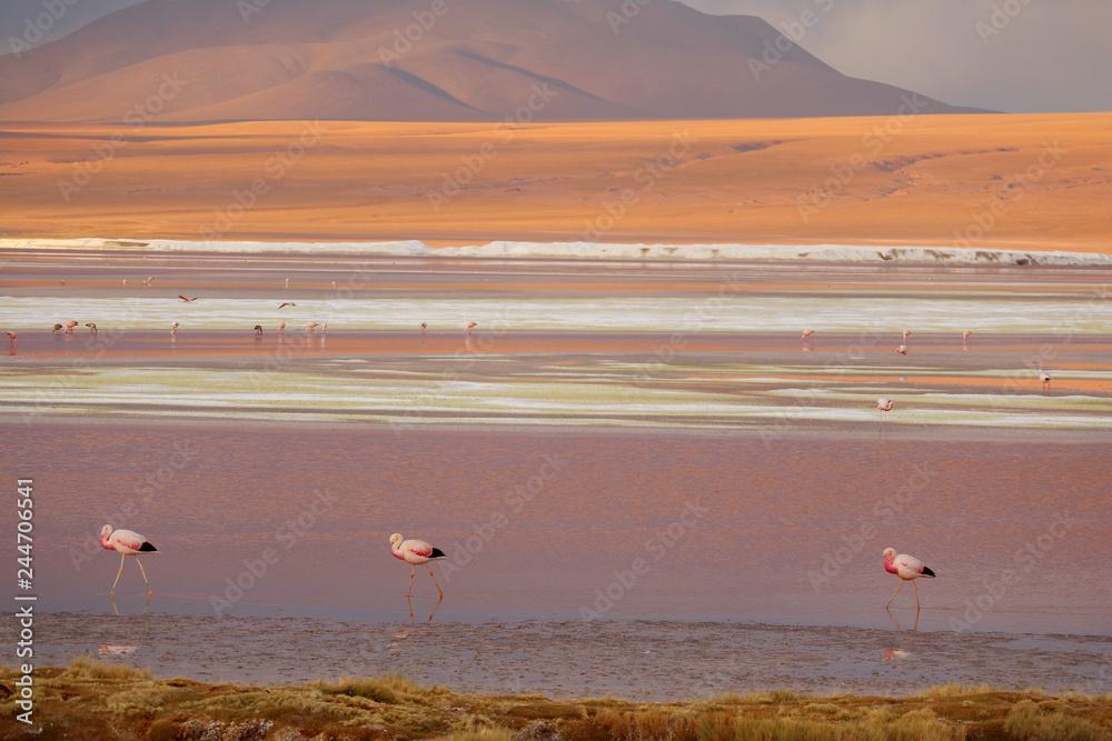 Pink Flamingos at Laguna Colorada or the Red Lagoon in Eduardo Avaroa Andean Fauna National Reserve, Potosi, Bolivia