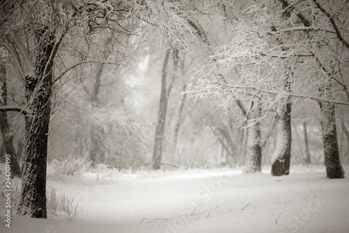 Poster Taupe fabulous winter in the forest with snow