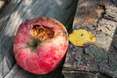 Valokuva Rotten apple lies on the wood