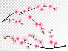 Apricot Blossom Branches Set Vector Illustration.