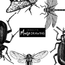 Vector Frame With High Detailed Butterflies, Beetles, Cicada Illustrations. Hand Drawn Insects Design. Vintage Entomological Background.