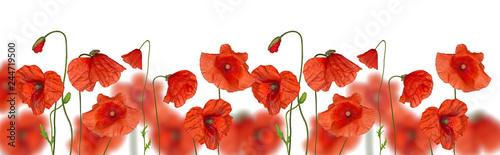 Photo sur Toile Poppy stripe of red poppy flowers on white