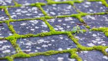 Brick Paving Stones With Moss