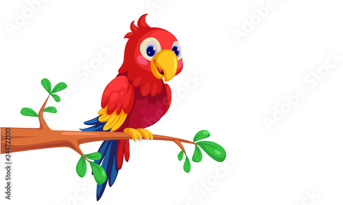 Photo  Macaw cartoon