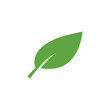 Green leaf icon graphic design template vector