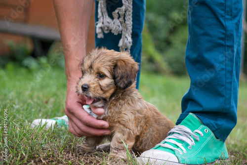 Fotografia Little, lovely, fluffy, cute brown puppy playing outdoors with owner, obediently sitting