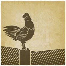 Rooster Crowed In Farm Fields ...