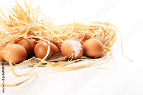 Egg. Fresh farm eggs. Easter egg with feather concept