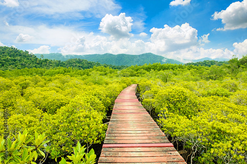 beautiful mangrove forest and wooden bridge