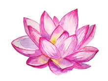 Watercolor Pink Lotus Flower Isolated On White Background. Hand Painted Botanical Illustration.