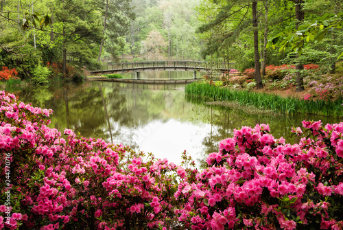 Tuinposter Azalea Azalea Flower Garden with Lake and a Footbridge