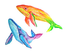 Watercolor Blue Purple And Yellow Orange Whales On White Background. Hand Painted Illustration Of Two Multicoloring Whales.