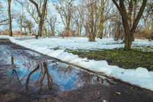 Melting Snow. Puddle On The Road. City Park