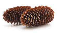 Two Pine Cones.