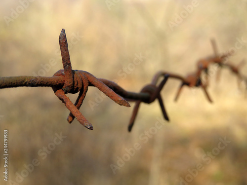 Photo  Rusty barbed wire isolated on blurred forest background