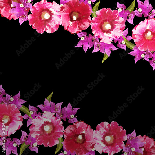 Tableau sur Toile Beautiful floral background of bougainvillea and mallow