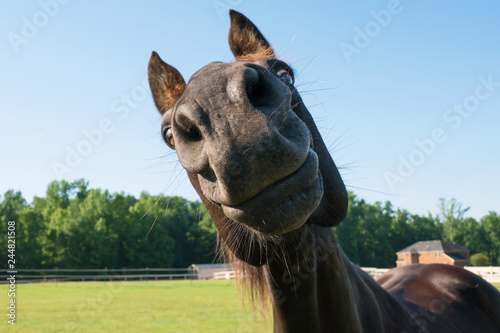 Foto op Canvas Paarden Big nose horse