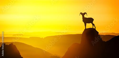 mouflon male silhouette