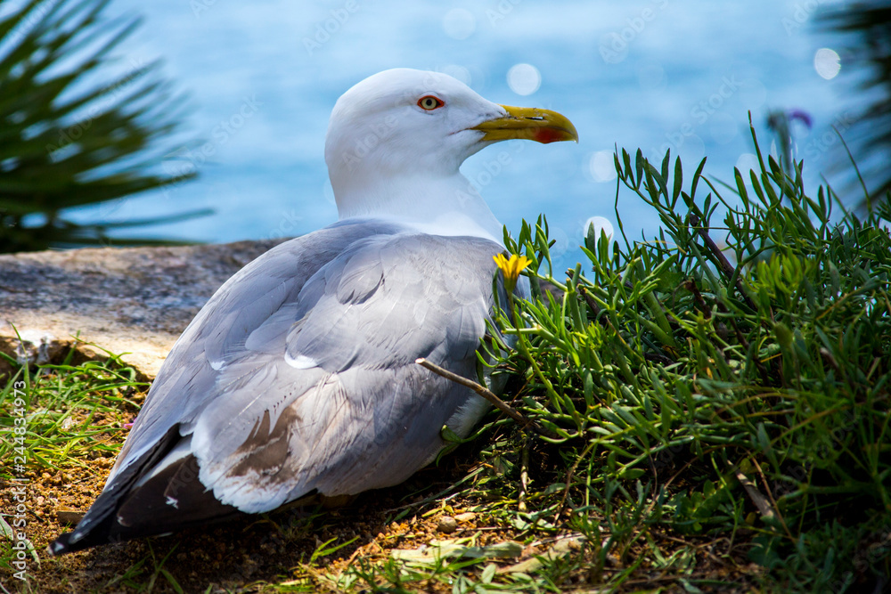 The seagull sits on a rock by the sea between the bushes.