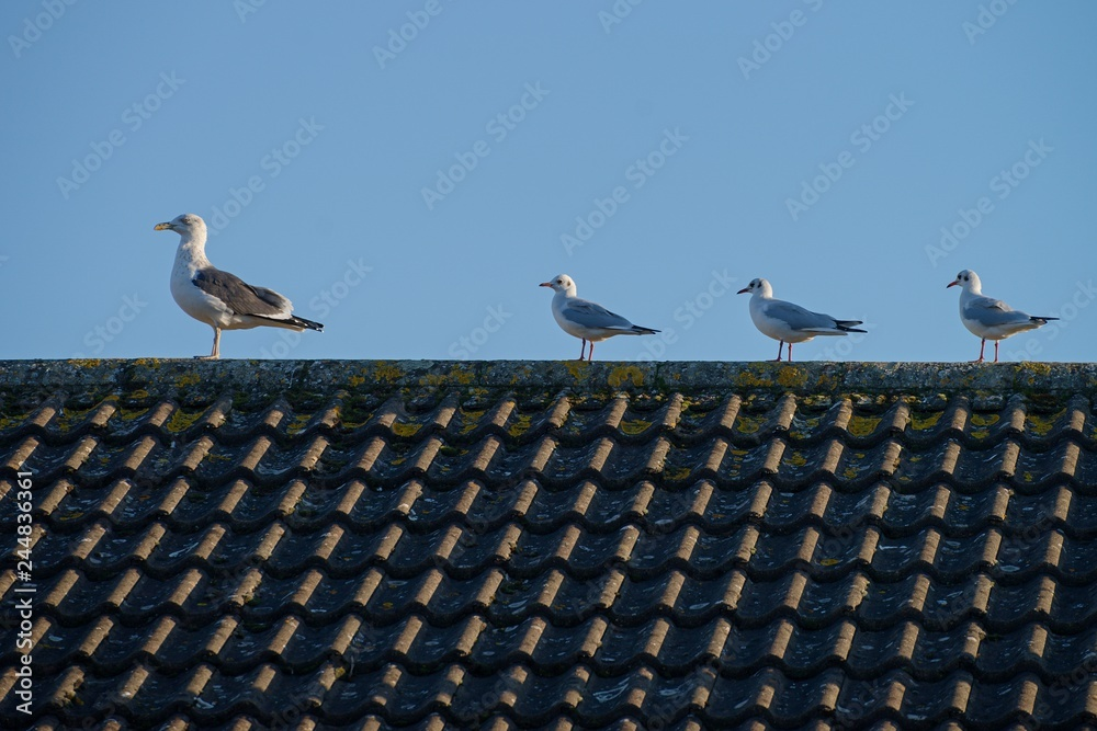 Four gulls sitting on the roof